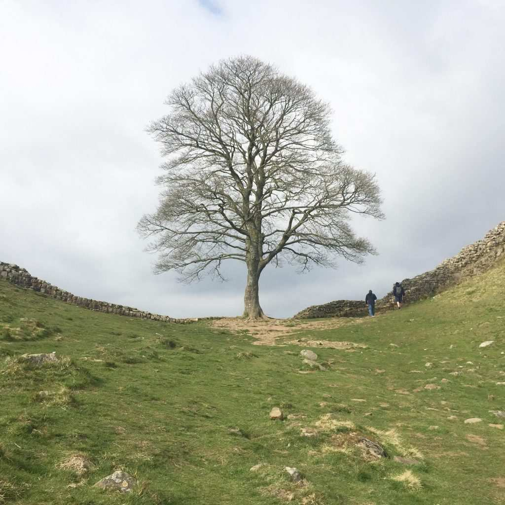 Famous Sycamore Gap